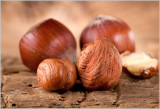 Hazelnuts – small, tasty and good for you